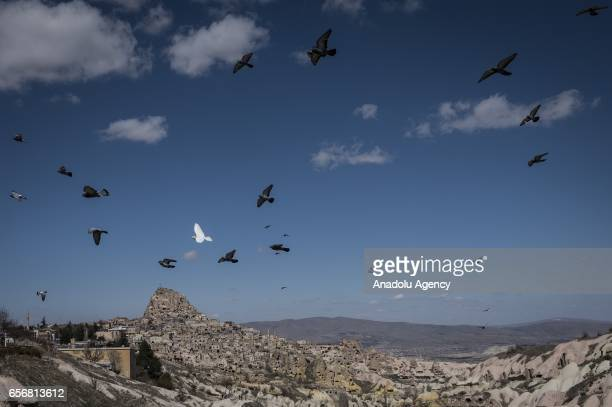 Flying birds are seen as Anadolu Agency's Visual News EditorinChief Ahmet Sel NOOR Images photojournalist Yuri Kozyrev founder of Shanghai Center of...
