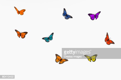Flying butterflies : Stock Photo