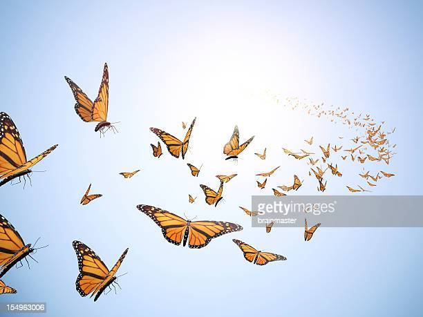 Flying butterflys