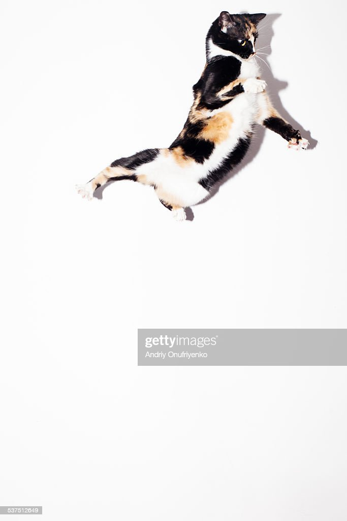 Flying cat : Stock Photo