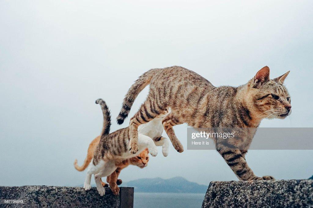 3 Flying Cats : Stock Photo