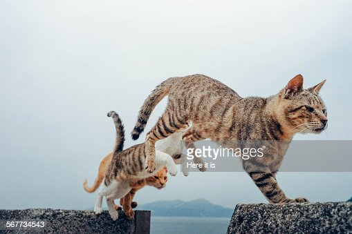3 Flying Cats