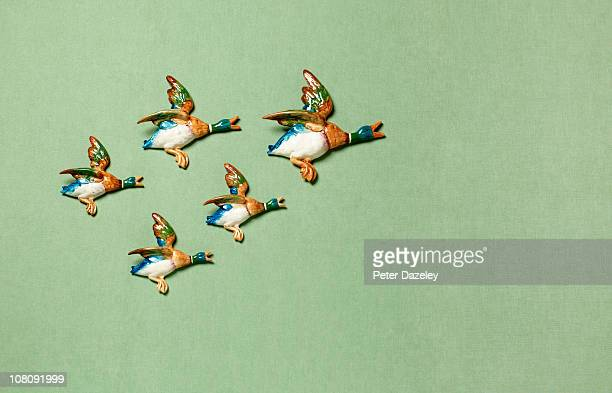 Flying ducks on domestic wall