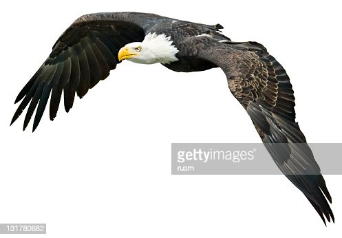Flying Eagle with clipping path on white background