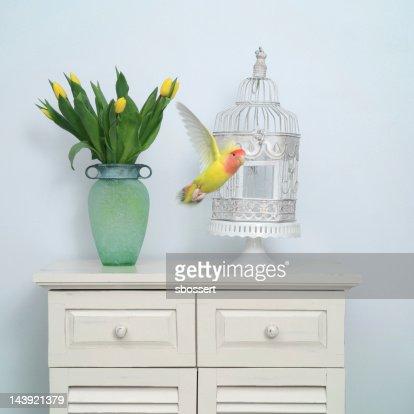 Flying Lovebird : Stock Photo