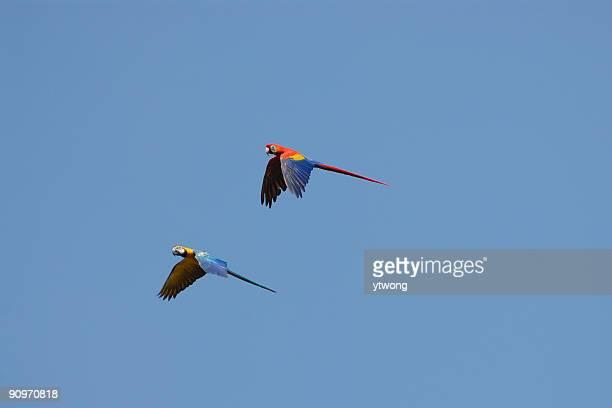 Voler des perroquets