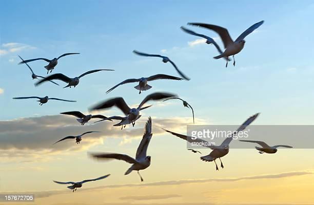 Flying seagull birds in the sky