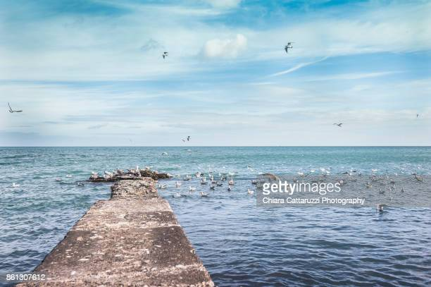 Flying seagulls over a blue Irish sea