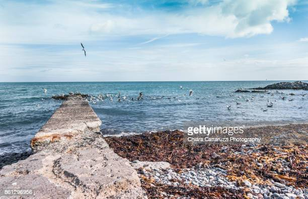Flying seagulls over a blue sea