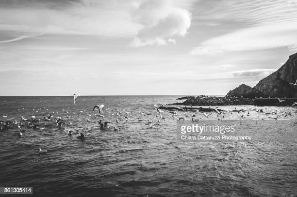 Flying seagulls over the Irish sea