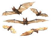 Flying Vampire bats isolated on white background