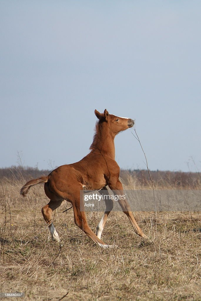 Foal Coming To Abrupt Stop Stock Photo | Getty Images