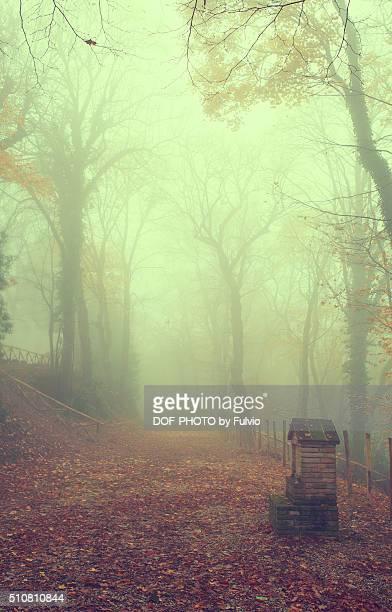 Fog 2015