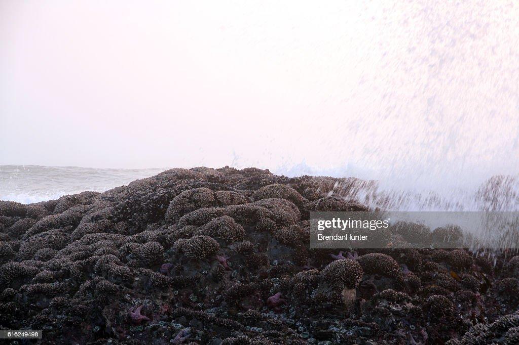 Fog and Sea : Foto de stock
