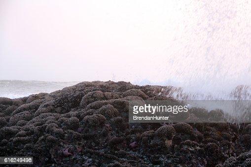 Fog and Sea : Stock Photo