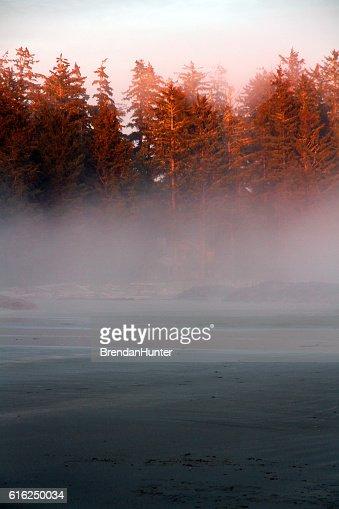 Fog and the Rainforest : Foto de stock