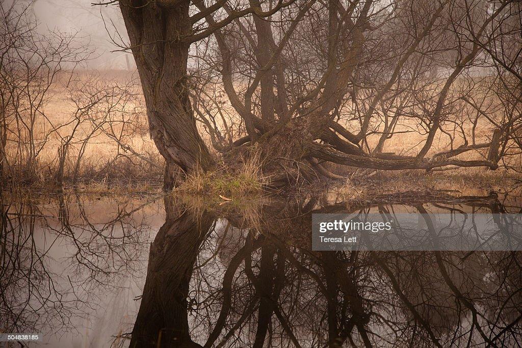 Fog at the pond