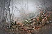 Fog in beech forest in the mountains