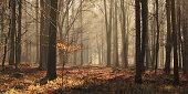 Fog in Bentley Wood