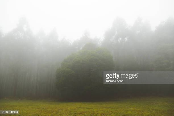 Fog in the field before a Forest