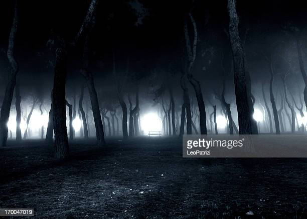 Fog in the pinewood