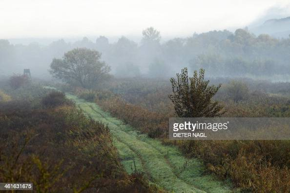 Fog is seen on the Szeuizvoelgyi hunting grounds on October 12 2013 near Kisbucsa Hungary where groups of Austrian often come to hunt NAGL