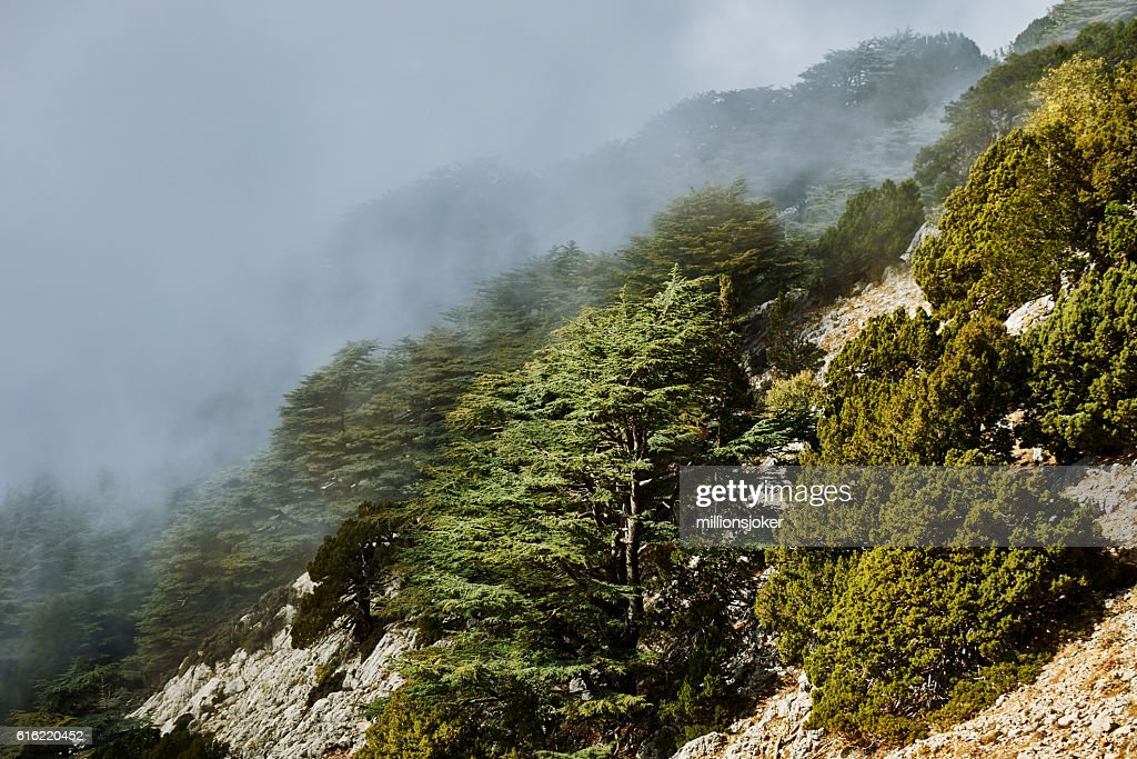fog mountain slope : Stock Photo