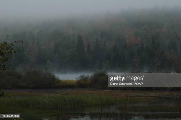 Fog on autumn trees