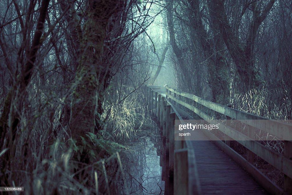 Fog on path at Marymoor Park
