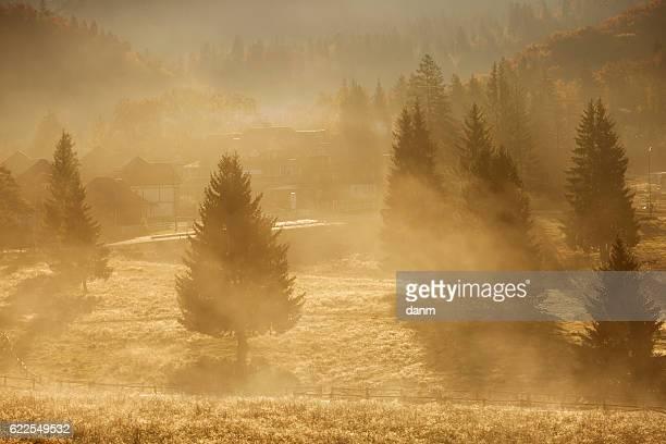 Fog on the mountain slopes with fir trees, autumn