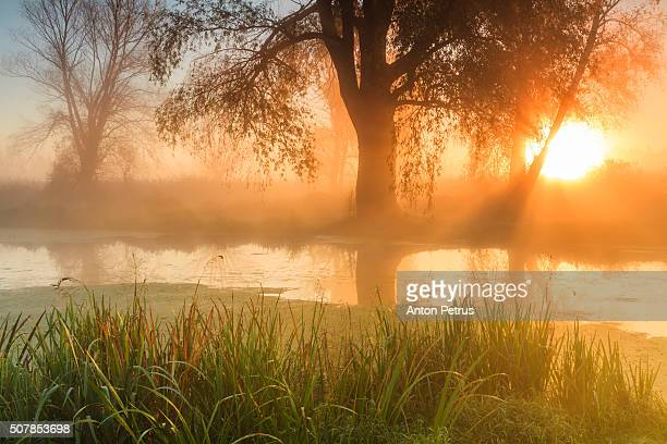 Fog on the river at dawn