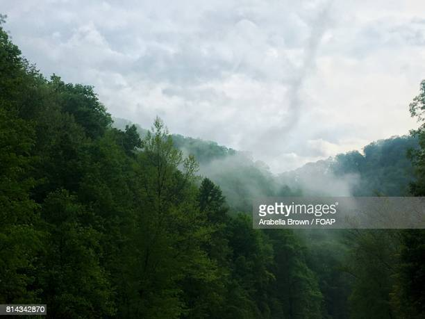 Fog over forest