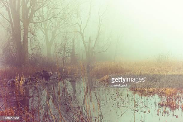Nevoeiro sobre swamps