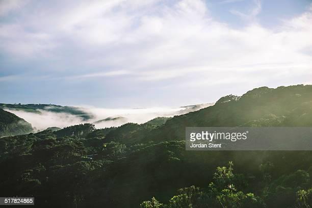 Fog over the Waitakere Ranges
