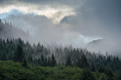 Fog rising at Neets Bay Behm Canal in Southeast Alaska near Ketchikan USA