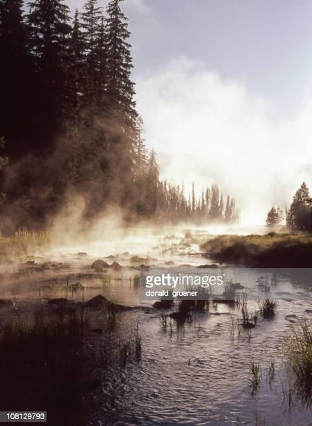 Fog Rising Off Fir Tree Lined River