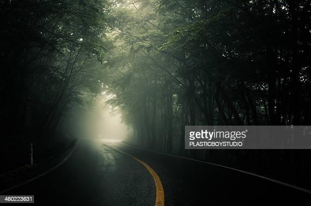 Fog / Road / Curve / light / forest