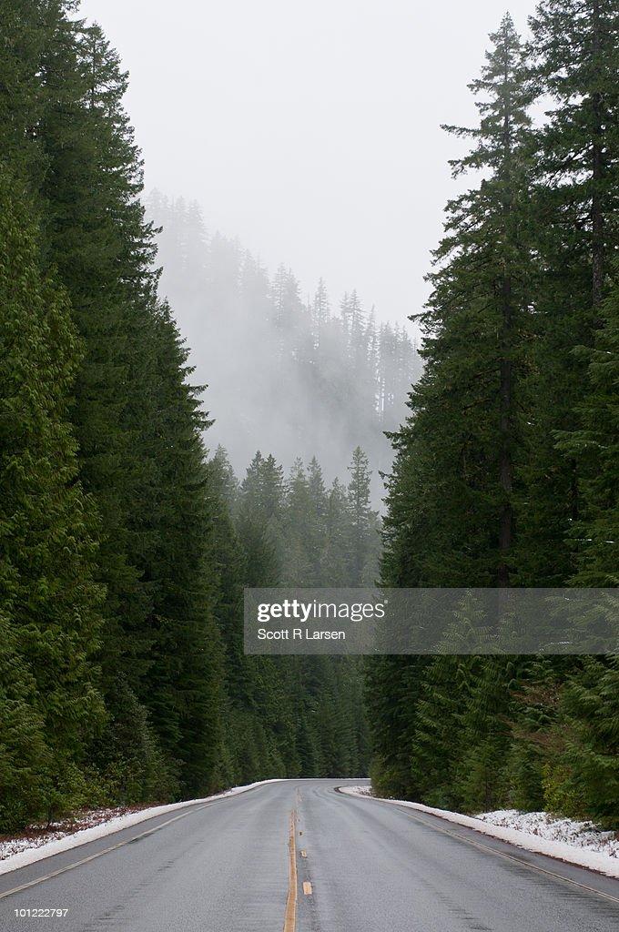 Fog shrouded McKenzie River Highway in Late Winter : Stock Photo