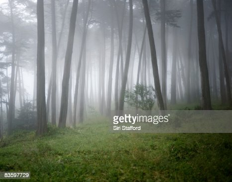 Fog surrounding trees in forest