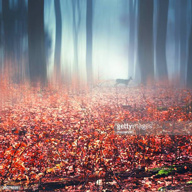 Foggy autumn forest, wet autumn leaves and deer, digitally manipulated