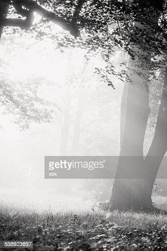 A foggy autumn morning : Stock Photo