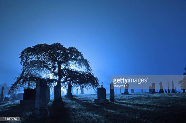 Foggy backlit graveyard