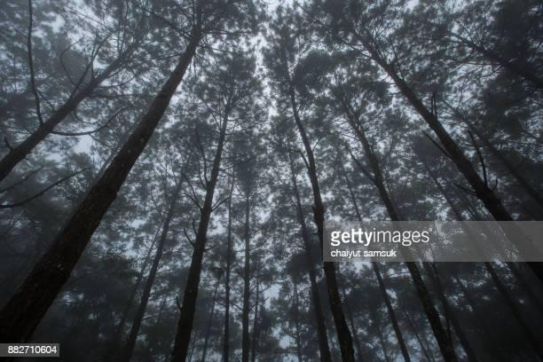 Foggy Beech Forest