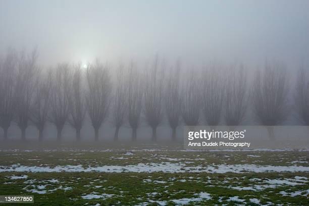 Foggy Belgium.