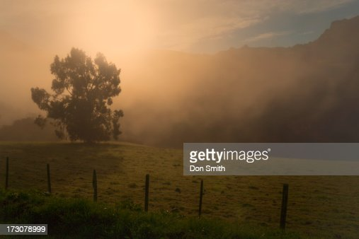 Foggy California Morning