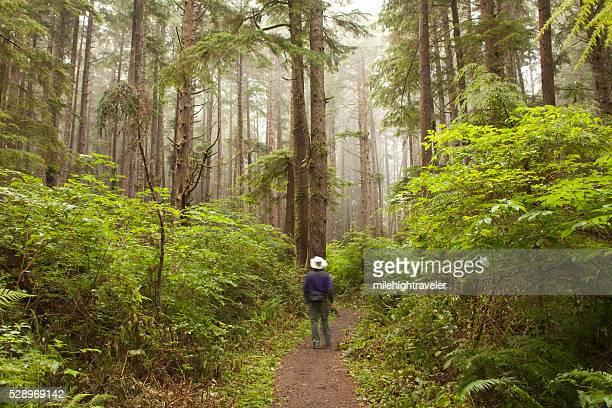 Foggy forest hiker on Olympic National Park trail Washington