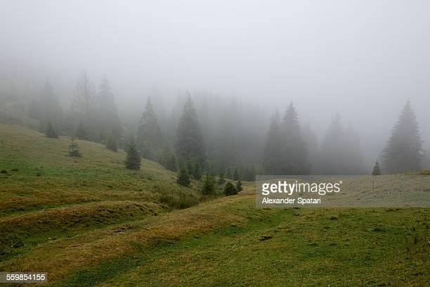 Foggy forest in Transylvania