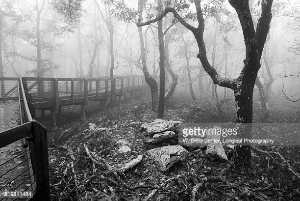 Foggy Hiking Trail at Cheaha State Park