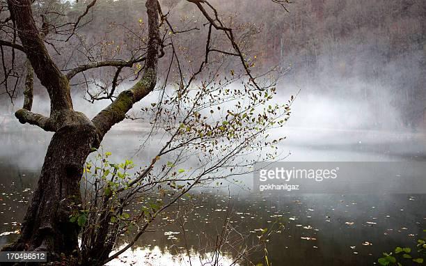 Nebeligen See Lake