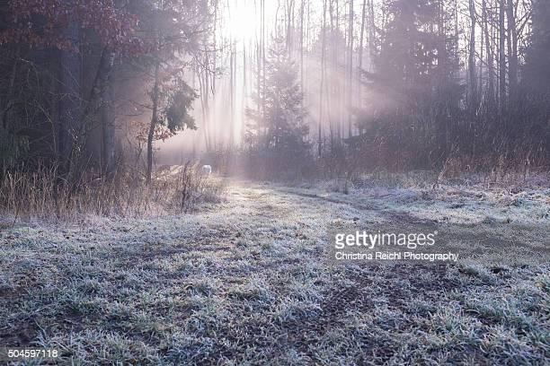 Foggy landscape/forest